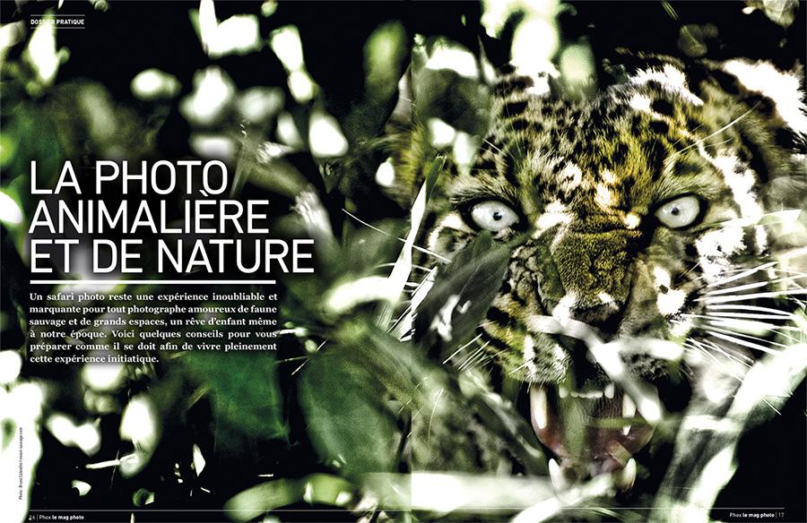 Phox photo animaliere